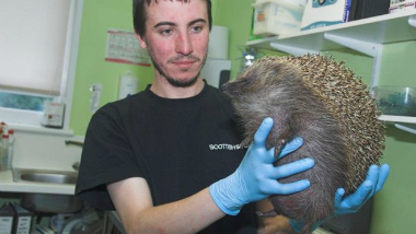 The injured hedgehog